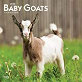 Baby Goats 2020 12 x 12 Inch Monthly Square Wall Calendar, Animals Domestic Baby Animals