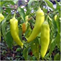 Package of 100 Seeds, Sweet Banana Pepper (Capsicum annuum) Non-GMO Seeds by Seed Needs