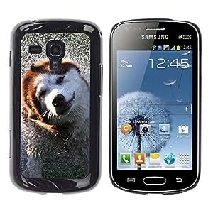 TopCaseStore / la caja del caucho duro de la cubierta de protección de la piel - Alaskan Malamute Border Collie Dog - Samsung Galaxy S Duos S7562