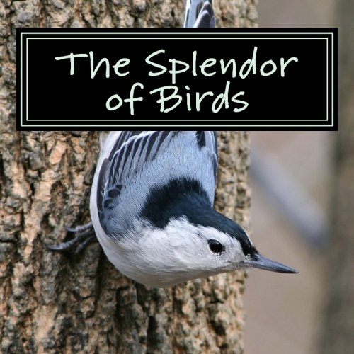 The Splendor of Birds: A Picture Book for Seniors, Adults with Alzheimer