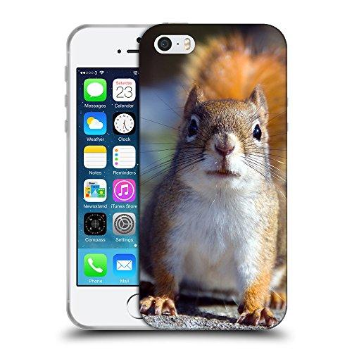 Just Phone Cases Coque de Protection TPU Silicone Case pour // V00004165 Fixant écureuil peur // Apple iPhone 5 5S 5G SE