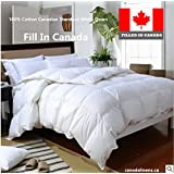 100% Cotton White Down Duvet 260T standard Filled in Canada (Twin)