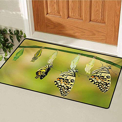 (GUUVOR Swallowtail Butterfly Front Door mat Carpet Transformation of Lime Butterfly Natural Life Cycle Theme Machine Washable Door mat W15.7 x L23.6 Inch Yellow Green Black)