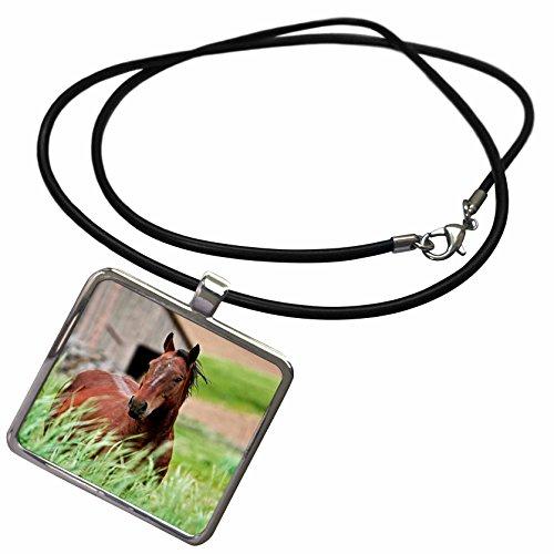 3dRose Danita Delimont - Horses - Horses, Palouse, Colfax in Washington State - US48 JRE0009 - Joe Restuccia III - Necklace With Rectangle Pendant (ncl_95830_1)
