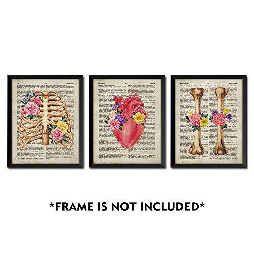 SUMGAR Vintage Wall Art Anatomy Posters 8x10 Dictionary Unframed Prints Flower Artwork Set of 3