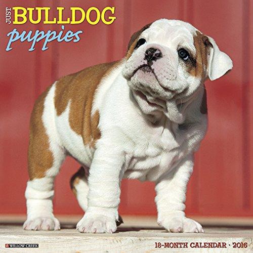 2016 Just Bulldog Puppies Wall Calendar