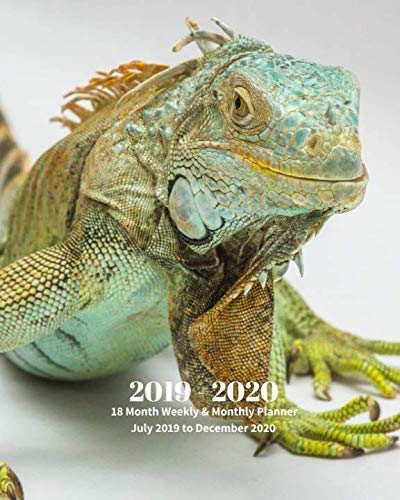 2019 - 2020 | 18 Month Weekly & Monthly Planner July 2019 to December 2020: Iguana Animal Vol 2 Monthly Calendar with U.S./UK/ ... Holidays– Calendar in Review/Notes 8 x ()