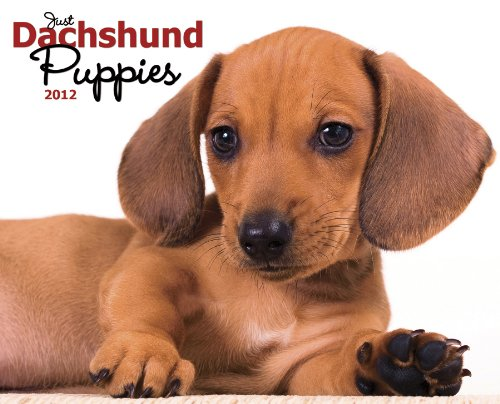 Just Dachshund Puppies 2012 Calendar (Just (Willow Creek))