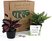 American Plant Exchange Endless Foliage Box, Live Houseplants, Care and Feeding Subscription Box, Small