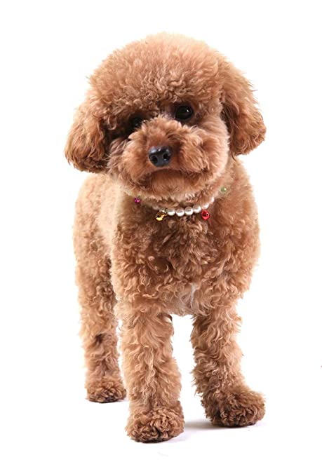 Gulunmun Collar de Perlas para Perros con arnés para Perros de ...