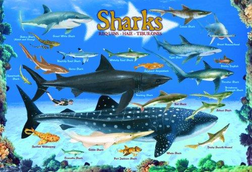Sharks-100-Piece-Jigsaw-Puzzle