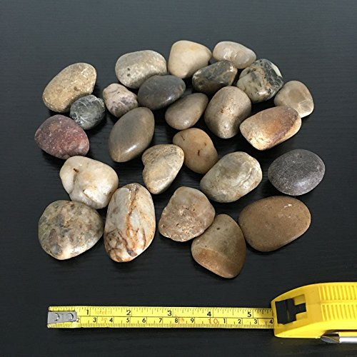 1Buy UK 1kg Large Assorted Browns Natural Stones Pebbles Craft Table Decoration Pot Vase Garden Weddings Rocks Aquarium