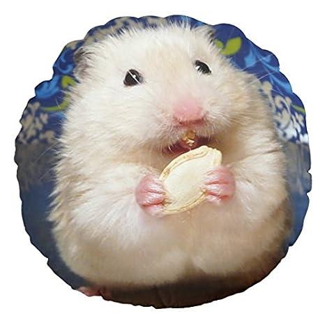 Amazon.com: Fluffy hámster de Sirios kokolinka comiendo una ...