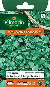 VILMORIN Cresson de Fontaine a larges feuilles