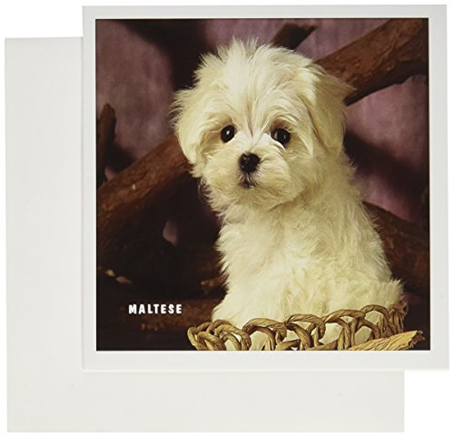 3dRose Adorable Maltese Puppy - Greeting Cards, 6 x 6 inches, set of 6 (gc_101695_1) (Maltese Note Cards)
