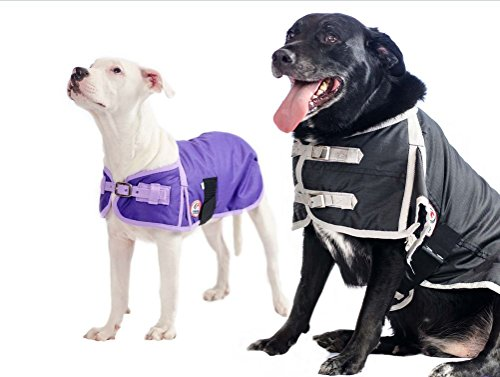 Derby Originals 600D Waterproof Dog Coat Insulated with Polyfill, Large, Purple