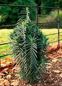 Gopher Killing Plants Amazon.com: Seeds and ...