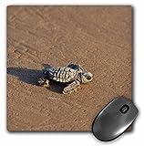 Best 3dRose Turtle Beach Mouse Pads - 3dRose Danita Delimont - Turtles - Kemps ridley Review