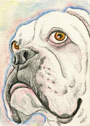 ACEO ATC Original Dog Art Drawing-White Boxer-Carla (Aceo Original Art)