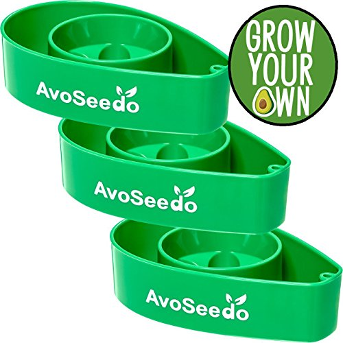 AvoSeedo Bowl Grown Your Own Avocado Tree, Evergreen, Perfect Avocado Tree Growing Kit for Every Avocado Lover - 3 Pack (All Green)