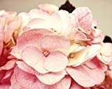 Pink Hydrangea Photo flower picture 5x7 inch Print