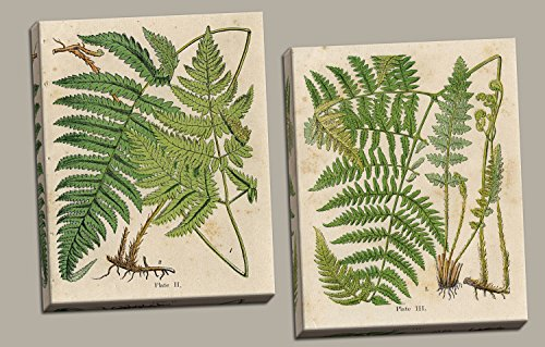 Fern Canvas Print (Popular Old-Fashioned Fern Botanical Prints; Two 11x14in Hand-Stretched Canvases. Cream/Green/Brown)