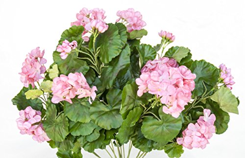 Geranium Bush, Pink, Set of 1