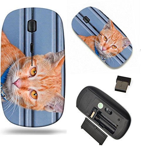 Orange Tabby Portrait - MSD Wireless Mouse Travel 2.4G Wireless Mice with USB Receiver, Noiseless and Silent Click with 1000 DPI for notebook, pc, laptop, computer, mac book design 19659213 portrait of orange tabby