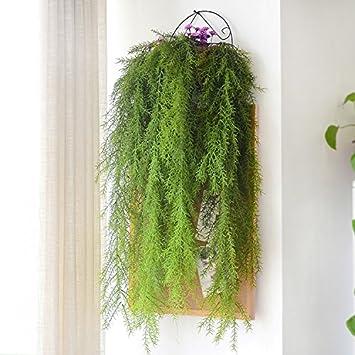 Plantas decorativas para interiores aucuba japonica for Plantas decorativas amazon