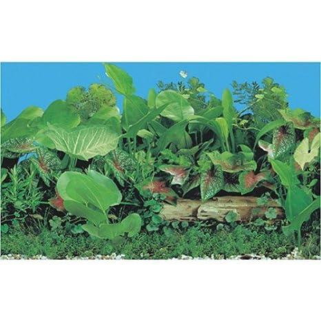 Tanque de peces de acuario Tropical plantados fondo - 60 cm, altura - 60 cm - todas las soluciones de la longitud de la charca: Amazon.es: Hogar