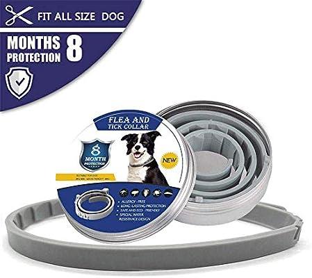 XUNKE Collares Antiparasitario para Perros y Gatos, contra Pulgas, Garrapatas y Mosquitos 8 Meses de Protección, 38cm para Pequeña Medio Grande Gatos ...