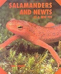 Salamanders Newts New Pet