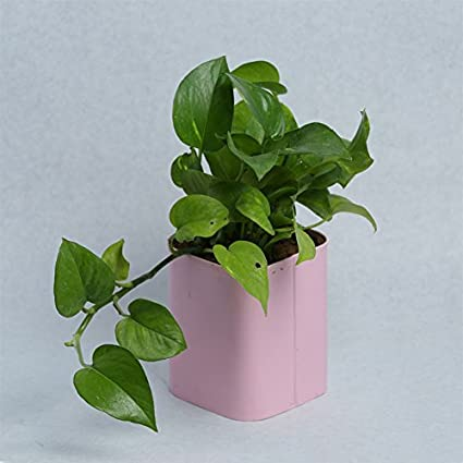 GRASSPER Metal Rectangle Metal Pot with Tray Set in Assorted Colours/Decorative Window Flower Pot with Glossy Finish/Plant Container - Pink