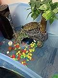 EmmaWu Turtle Filter Small Tank Filter Low Water