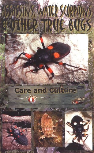 Bug Assassin (Assassins, water scorpions & other true bugs: Care and culture)