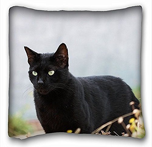 My Honey Pillow Pillow Cover Cat Cat Black Square 18 x 18 Inches