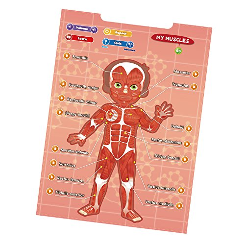 BEST LEARNING i-Poster My Body - Interactive Educational Human Anatomy Talking Game Toy System to Learn Body Parts, Organs, Muscles and Bones for Kids Aged 5 to 12 by BEST LEARNING (Image #3)