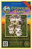 Everwilde Farms - 2000 Palmer's Penstemon Native Wildflower Seeds - Gold Vault Jumbo Seed Packet