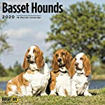 2020 Basset Hounds Wall Calendar by Bright Day, 16 Month 12 x 12 Inch, Cute Dogs Puppy Animals Hunting Canine 4