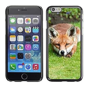 Kellie-Diy Hot Style cell phone PC case DwnRaBPrhLO cover // Fox iPhone 6 4.7