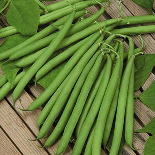 (Slenderette Green Bean - Gourmet quality, smooth, stringless pods.(25 - Seeds))
