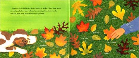 Why Do Leaves Change Color?: Amazon.ca: Betsy Maestro, Loretta ...