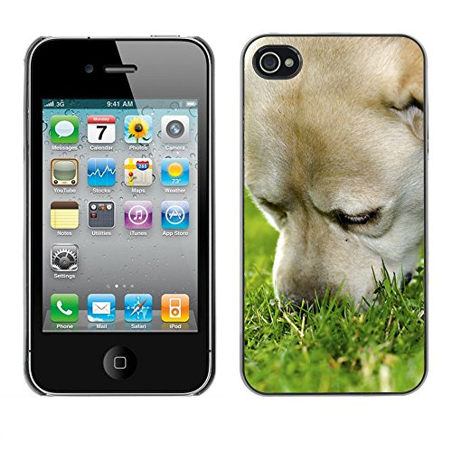 Premio Sottile Slim Cassa Custodia Case Cover Shell // F00006906 chien // Apple iPhone 4 4S 4G