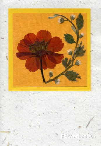Pressed Flower Card - Handmade Greeting Cards with Real Pressed Flowers and Leaves; Orange Cosmos Flower on White Handmade Card Stock; Holiday, Mothers Day, Thank You Card