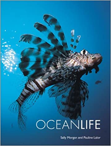 ocean life sally morgan pauline lalor 9781856485913 amazon com