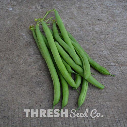 - Snap/Green Bean (Bush) - Empress - 50 seeds + Free Gift