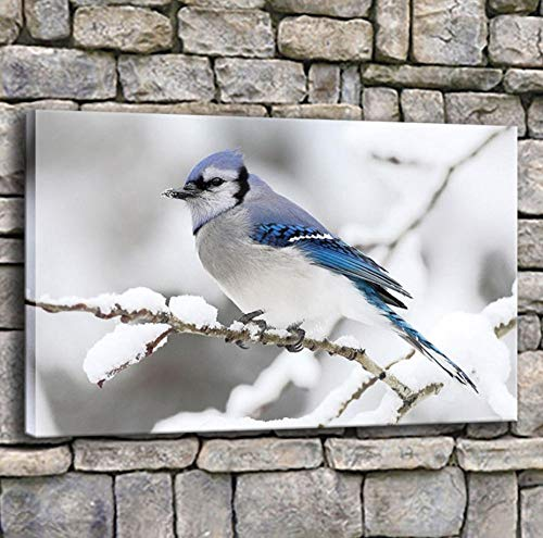 sasdasld Canvas Prints Painting Home Decor 1 Piece Beautiful Winter Blue Jay Bird Poster Living Room Wall Art Snow Scene Pictures Framed-40x60CM with Frame/NO Frame ()