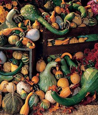 Burpee Ornamental Big Gourds Mix Gourd Seeds 25 - Gourd Seeds