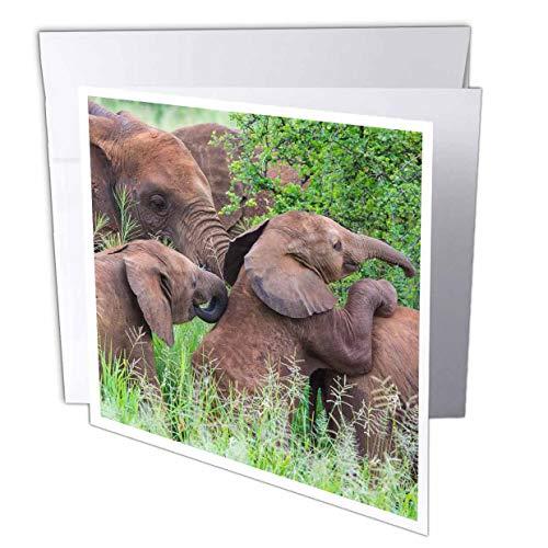 - 3dRose Danita Delimont - Elephants - Africa. Tanzania. African Elephants at Tarangire National Park. - 12 Greeting Cards with envelopes (gc_312520_2)