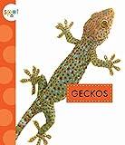 Geckos (Spot)